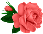SSS_Roses_Element-14.png