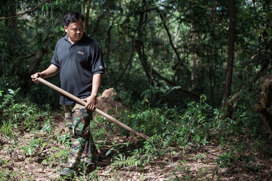 2. Охота на тарантулов довольно опасное занятие, хотя их укус и не является смертельным. Проблема в