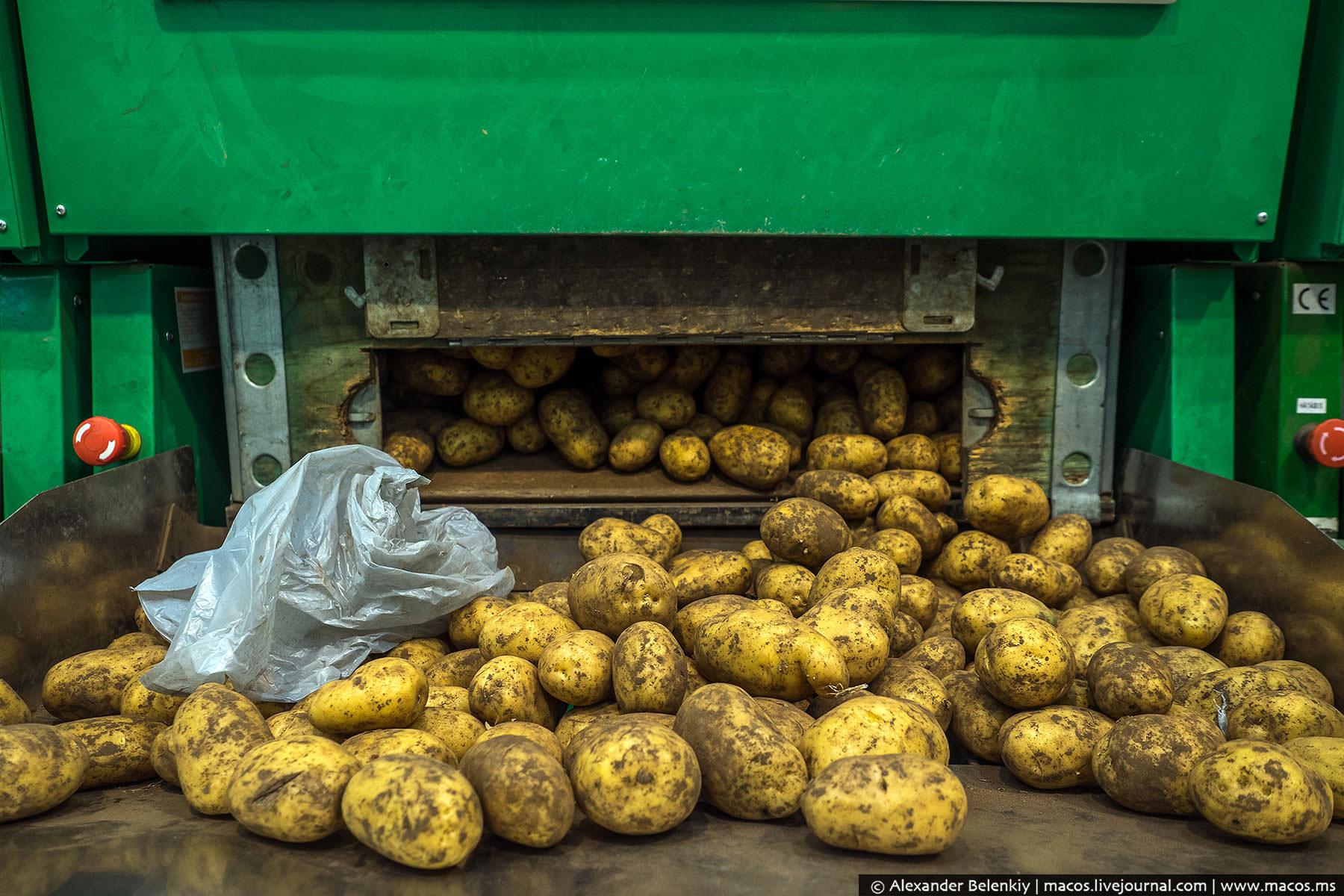 Выдают ее специальные картоматы: нажимаешь кнопку — высыпается килограмм картошки. Удобно.