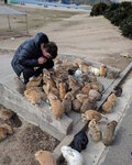 okunoshima-rabbit-island-japan-6.jpg