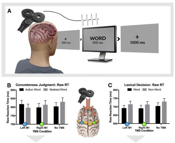 Ответственные задвижения зоны мозга помогают понимать смысл слов— Ученые