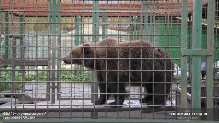 Росимущество предложило перестать убивать конфискованных животных