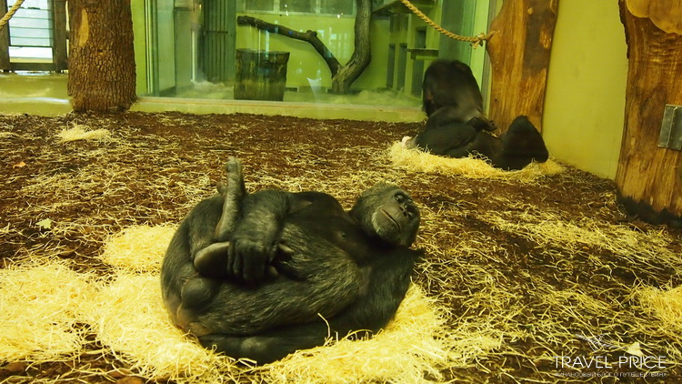 приматы зоопарка Берлина