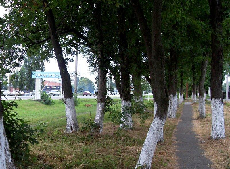 У дороги в центр Краснодара, июль, дождливая погода ...SDC13076.JPG