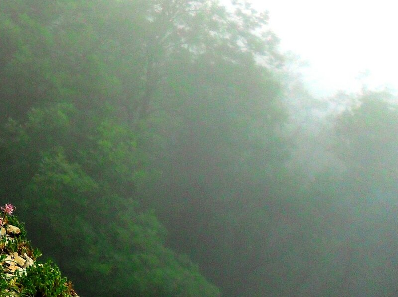 В тумане лес внизу ... SAM_0699.JPG