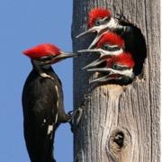 птица и птенцы