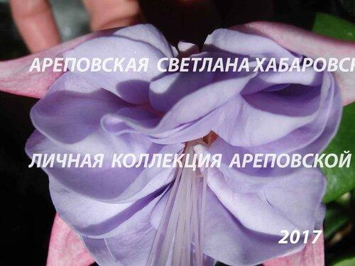НОВИНКИ ФУКСИЙ. - Страница 5 0_19bbe2_fe629f24_L