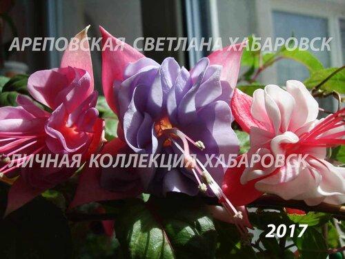НОВИНКИ ФУКСИЙ. - Страница 5 0_19bbeb_fd09e5d5_L