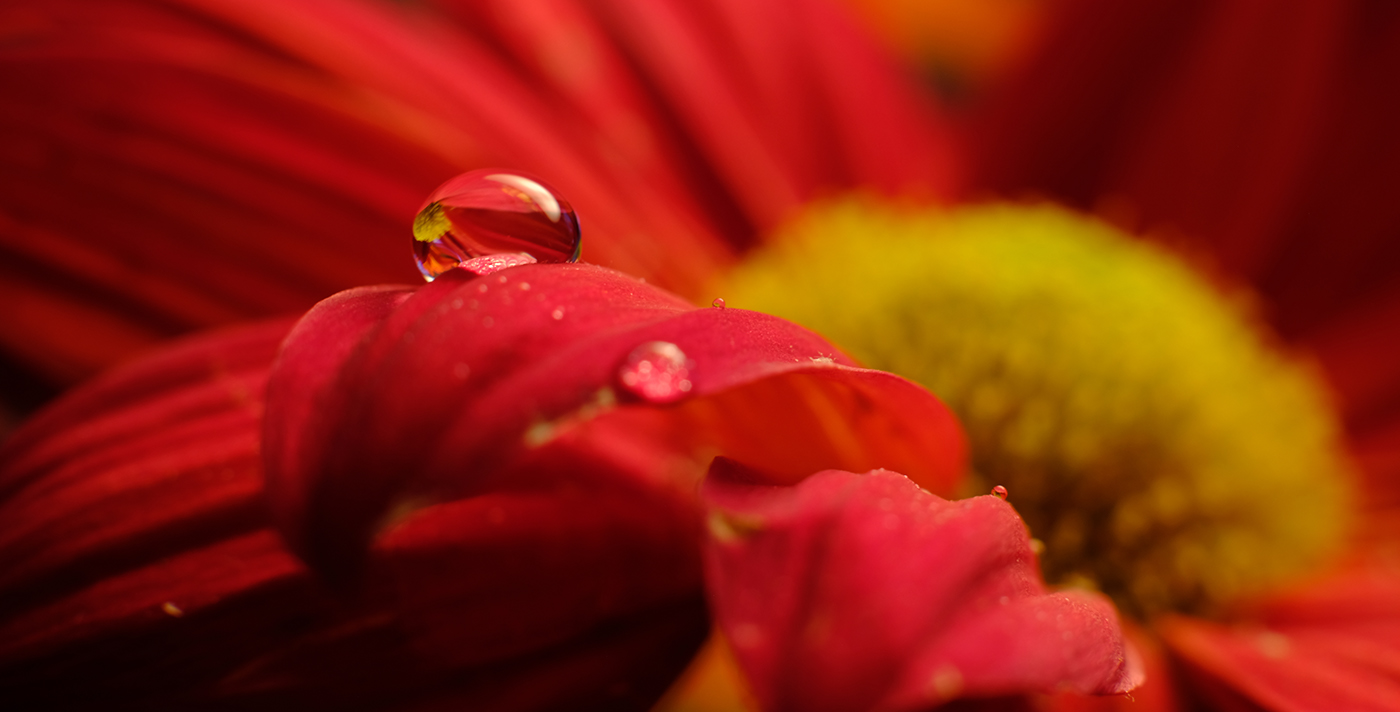 Капли воды на цветах Water Drops on Flowers / фото Dennis Croxall