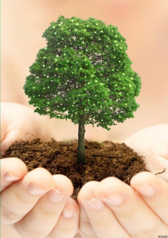 14 мая Всероссийский день посадки леса. Дерево в ладошках