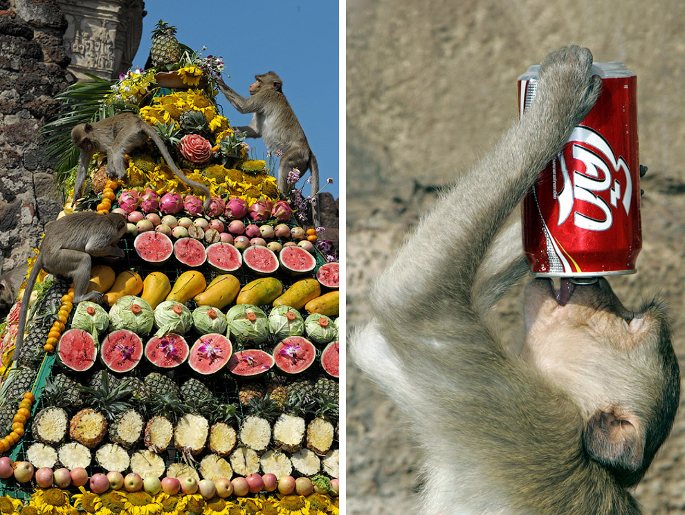 9. Кстати, в этому году обезьянам «перепало» меньше из-за траура по королю Таиланда. Вроде как