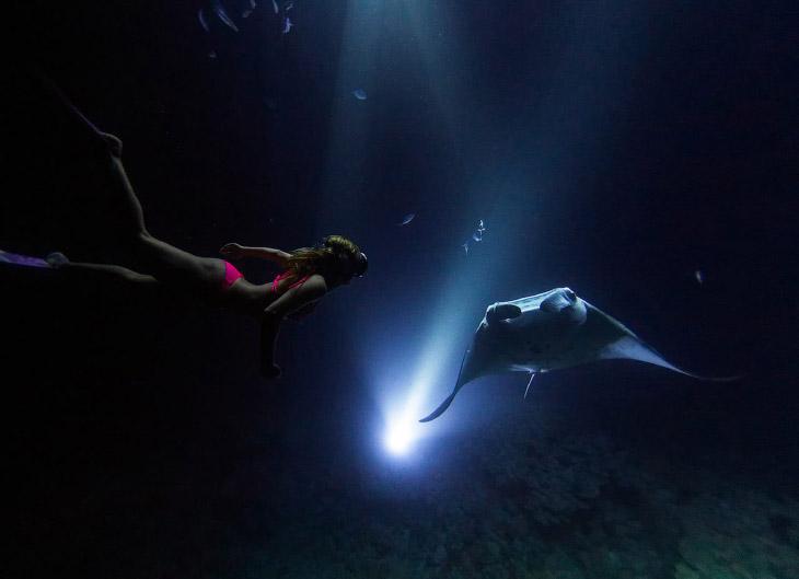 2. Гиганты не опасны, эти рыбы питаются зоопланктоном, отфильтровывая его из воды. (Фото Sarah Lee):
