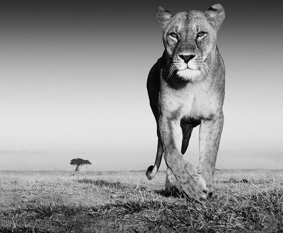 Это были 10 снимков шотландского фотографа David Yarrow из его книги о дикой природе.