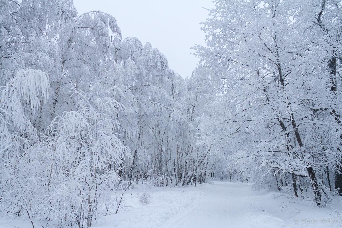 Кумысная поляна зима фото 10