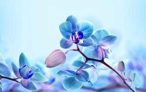 orhideya-lepestki-vetka-makro-752.jpg