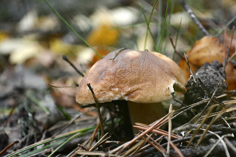 грибной мир 16 34.jpg