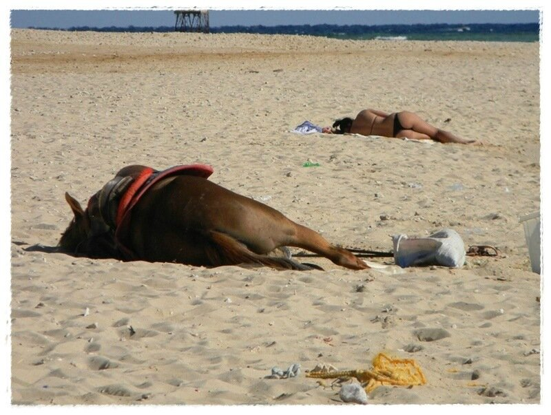Смешные животные отдыхают, как люди— весёлые фотографии