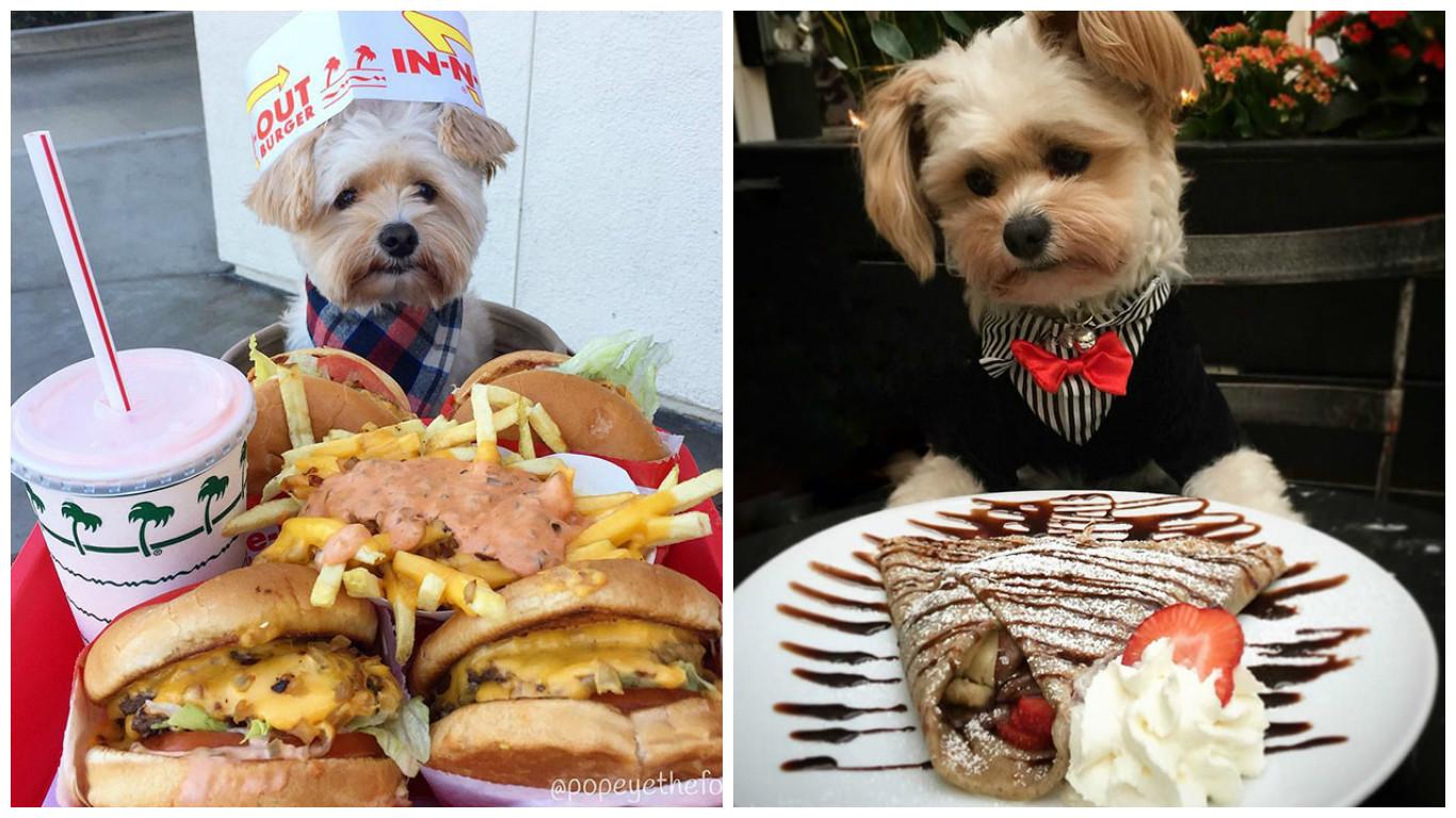 Уличного голодного пса подобрали, обогрели и сделали гурманом (32 фото)