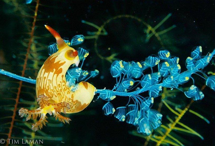 Подводный мир. Фотограф Tim Laman