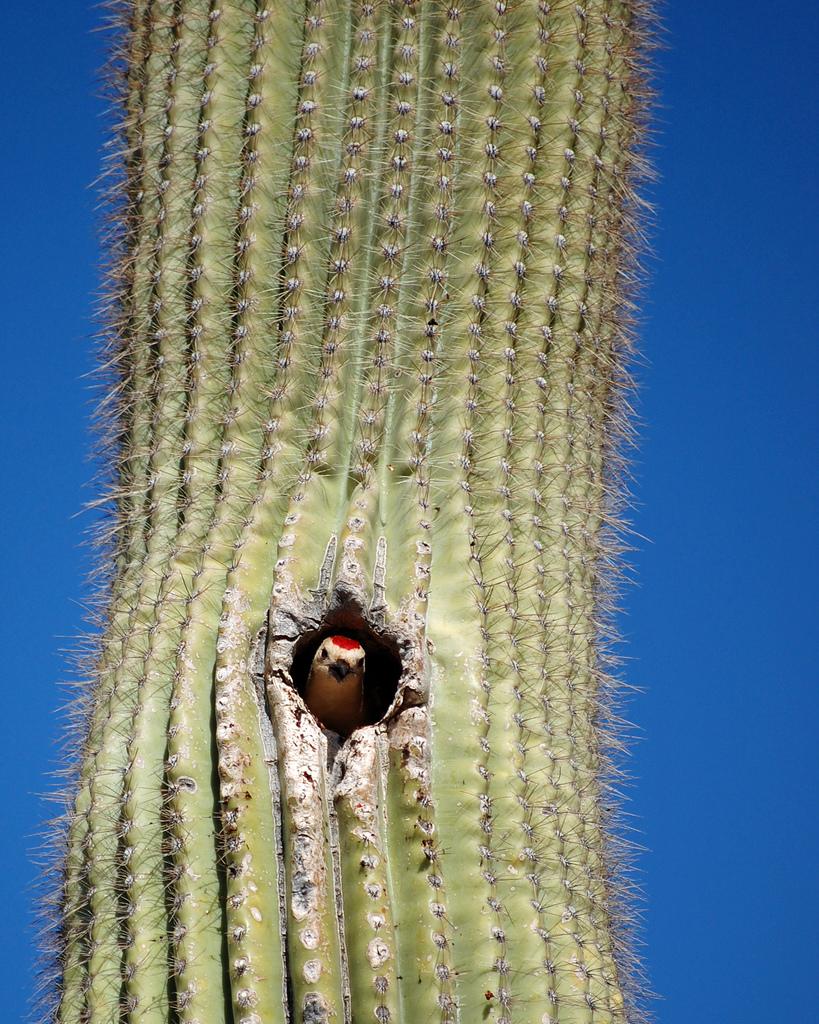 Кактус и его обитатели (24 фото)