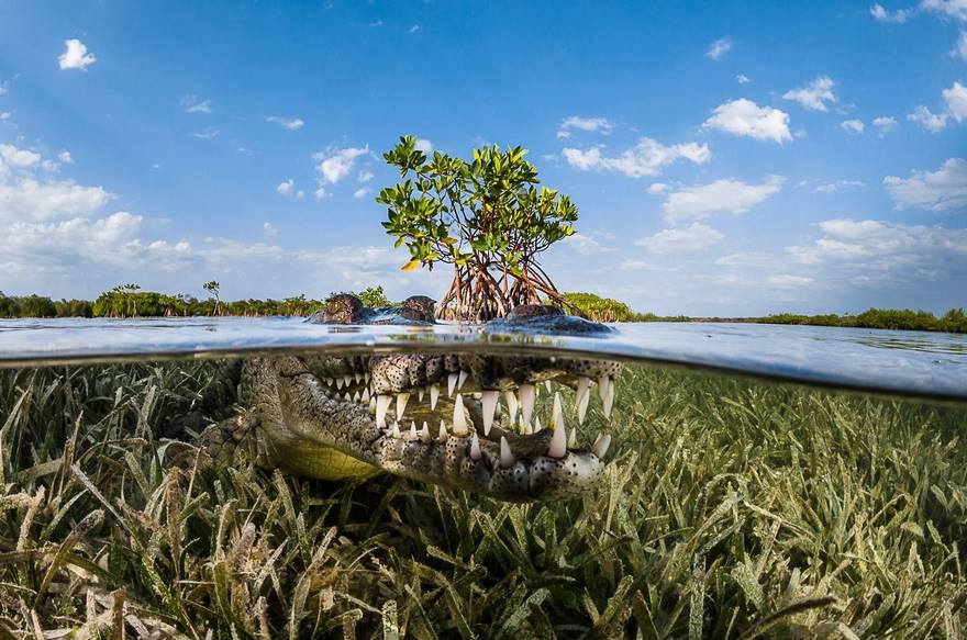 Поощрительная премия в категории «Природа» — «Мангровые заросли», Куба. Фото: Greg Lecoeur.