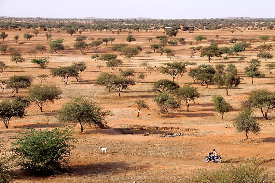 Деревья в окрестностях Гором-Горома, Буркина-Фасо.