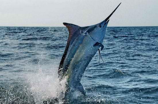 Рыба в Австралии утащила рыбака в море