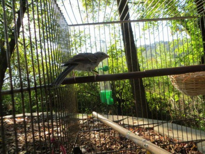 Cпасение выпавшего из гнезда птенца