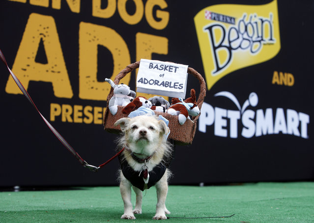 Tompkins Square Halloween Dog Parade (25 pics)