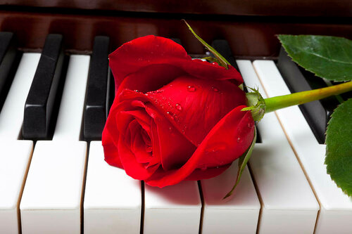 red-rose-on-piano-keys-garry-gay.jpg