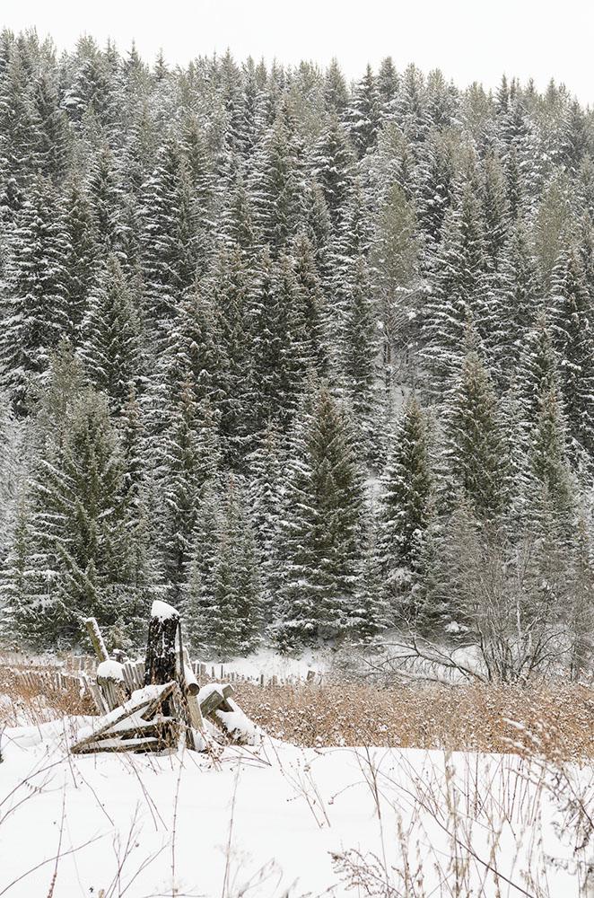 Фото 21. Зимний лес на Урале