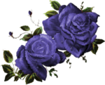 CJ_Colored Roses 2Lg_1.png