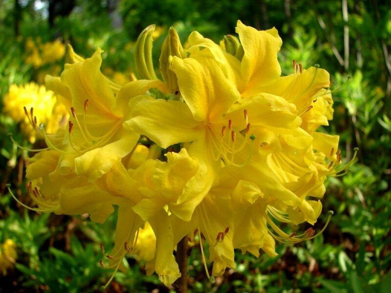Цветы, у лесной тропы