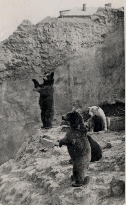 511199 Зоопарк 1948 Соколов А..jpg