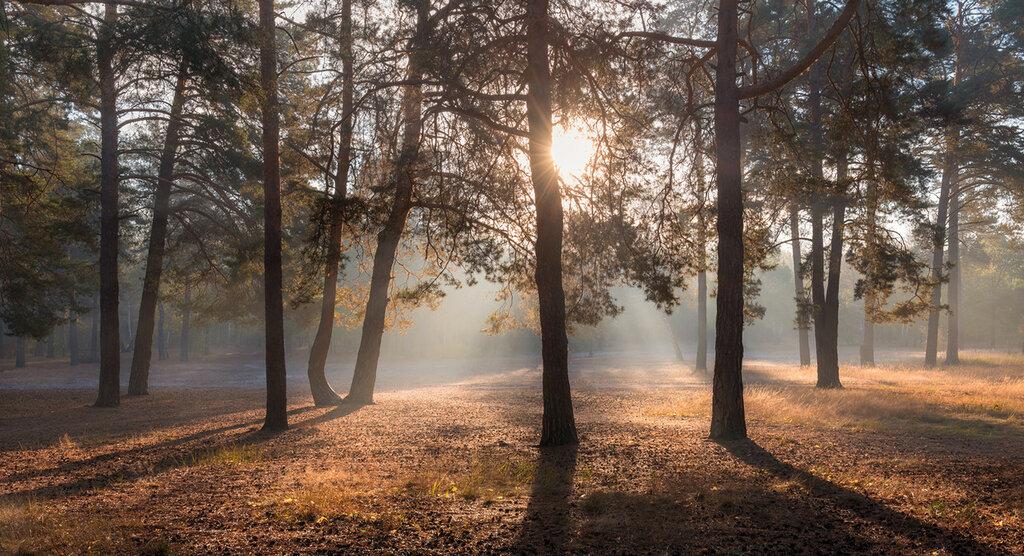 Галанзовская Оксана - Растворяются тени в утренней неге рассвета.jpg