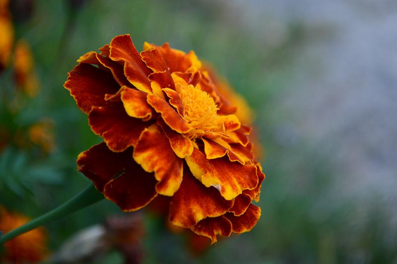 цветы дождь 7.jpg