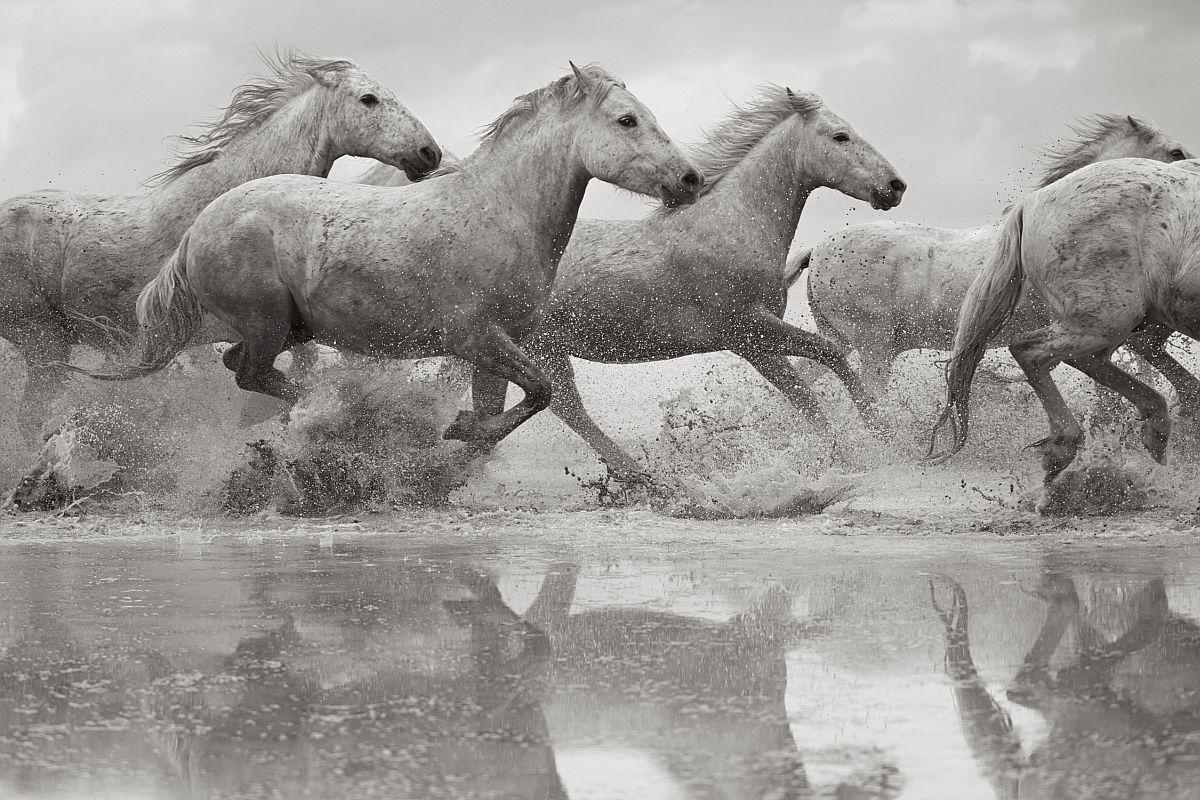 Белые лошади Камаргу. Фотограф Дрю Доггетт.