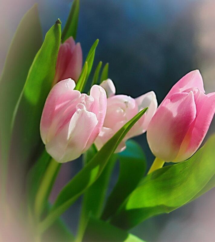 Букетик нежных тюльпанов.