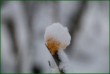 http://img-fotki.yandex.ru/get/194835/15842935.41c/0_f181c_a02ebc92_orig.jpg