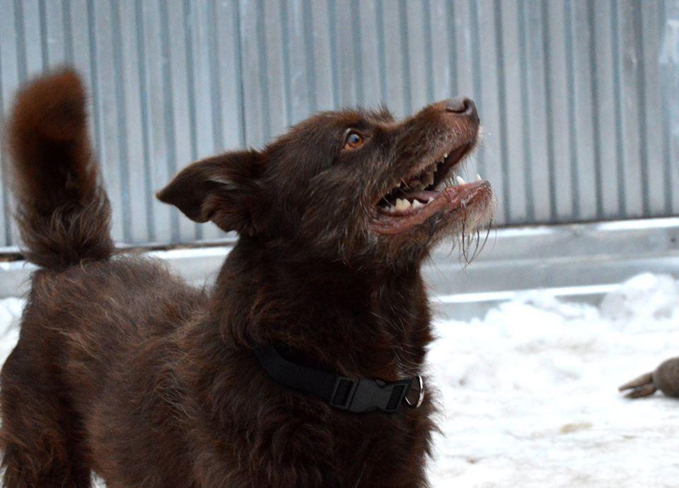 Бренди собака из приюта догпорт