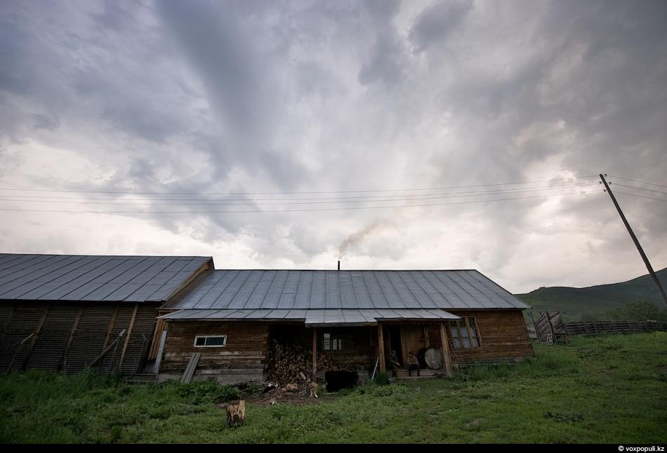 Как молодым оленям срезают рога, чтобы добыть пантокрин (35 фото)