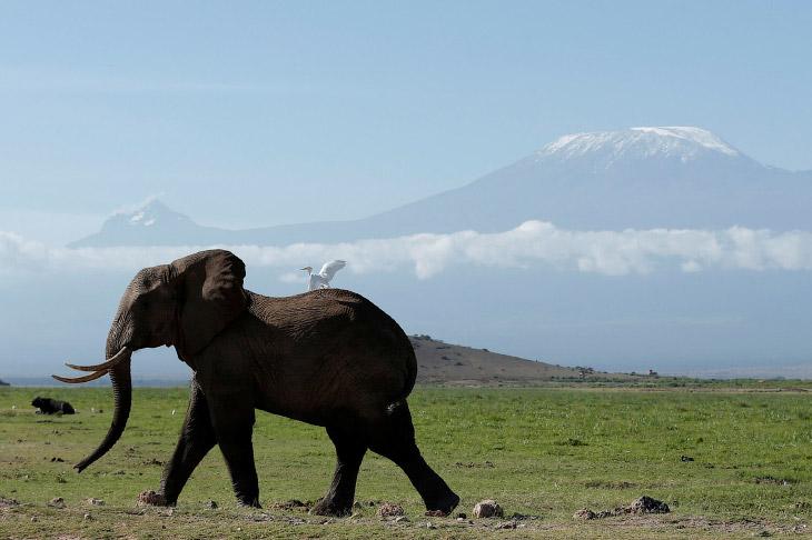 1. В национальном парке Амбосели обитает более 400 видов птиц и 80 видов млекопитающих.