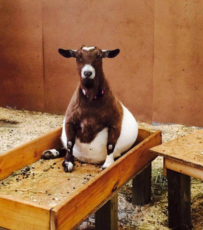 Беременность — она такая: самые очаровательные животные