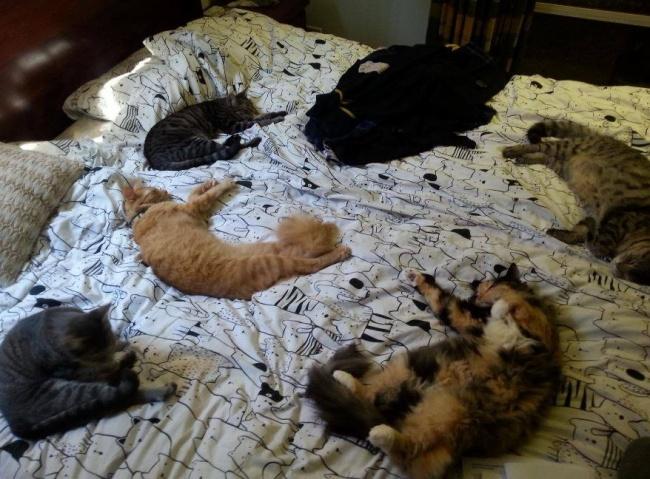 © imgur.com  Иужповерьте, если кошка захочет украсть вашего супруга, ееничто неостановит