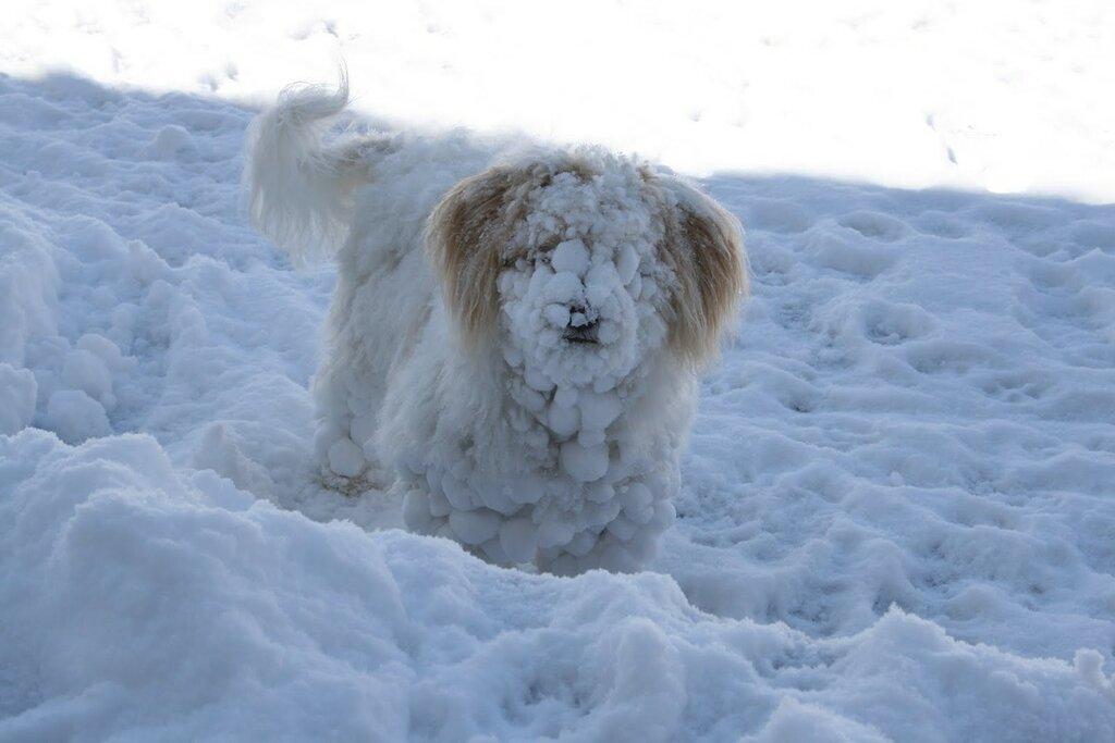 99px_ru_photo_258620_pes_ves_zaporoshennij_snegom.jpg