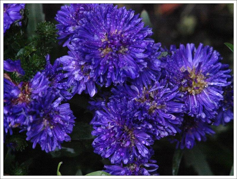 119_Flowers.jpg