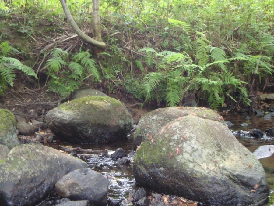 Ручей среди камней и папоротников.