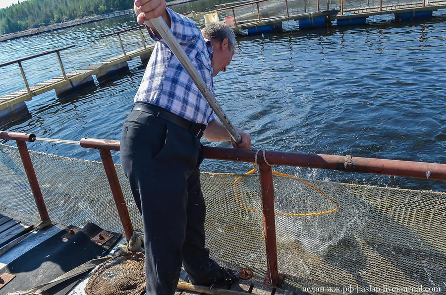 53. Николай Владимирович вылавливает для нас рыбу.