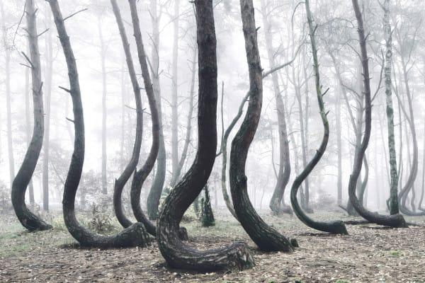 Что еще интересно: верхушки всех деревьев направлены в одну сторону — на север.