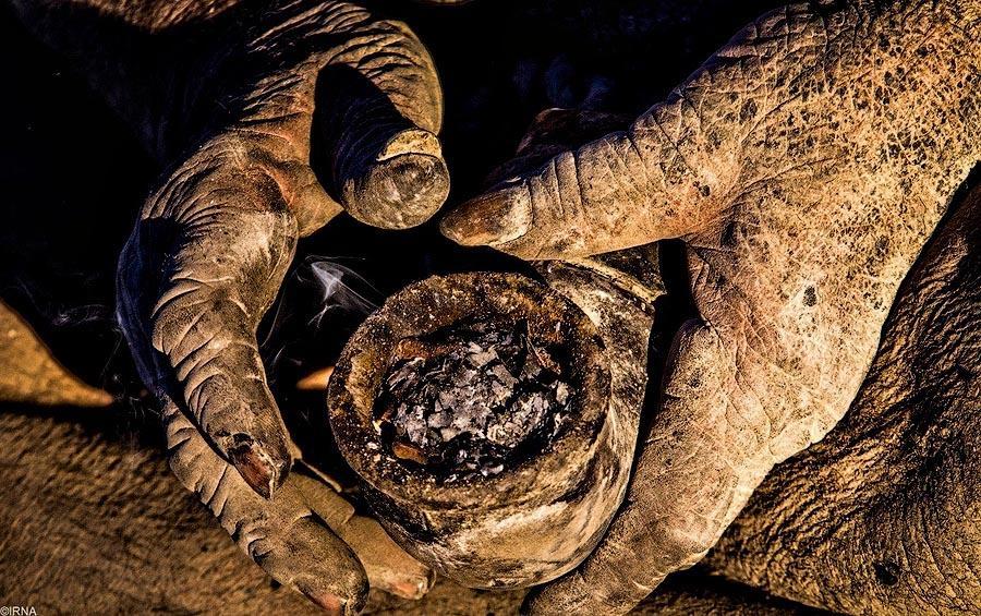 2. Знакомьтесь, это 80-летний иранский бродяга Аму Хаджи, и он не мылся более 60 лет.
